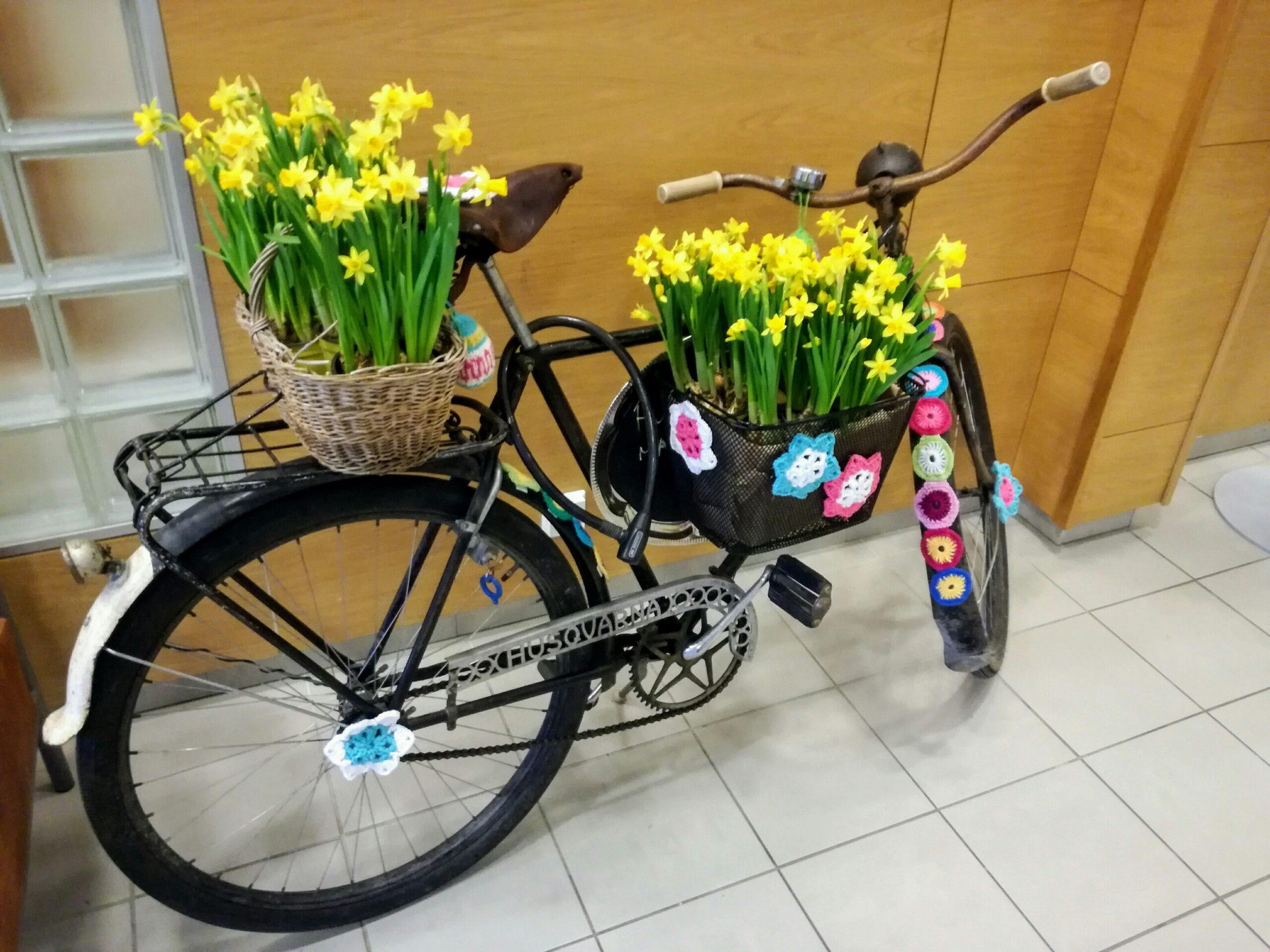 Pyörä narsissikoreilla koristeltuna.