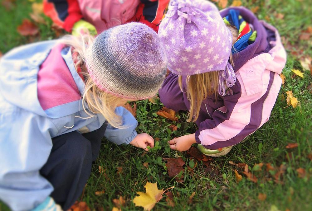 Kolme pientä lasta tutkii ruohikolle pudonneita vaahteran lehtiä