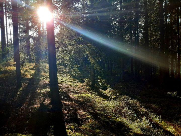Aurinko laskee puiden taa
